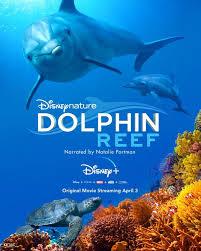 Dolphin Reef Disney +