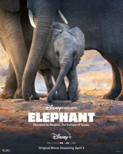 ELEPHANT Disney+